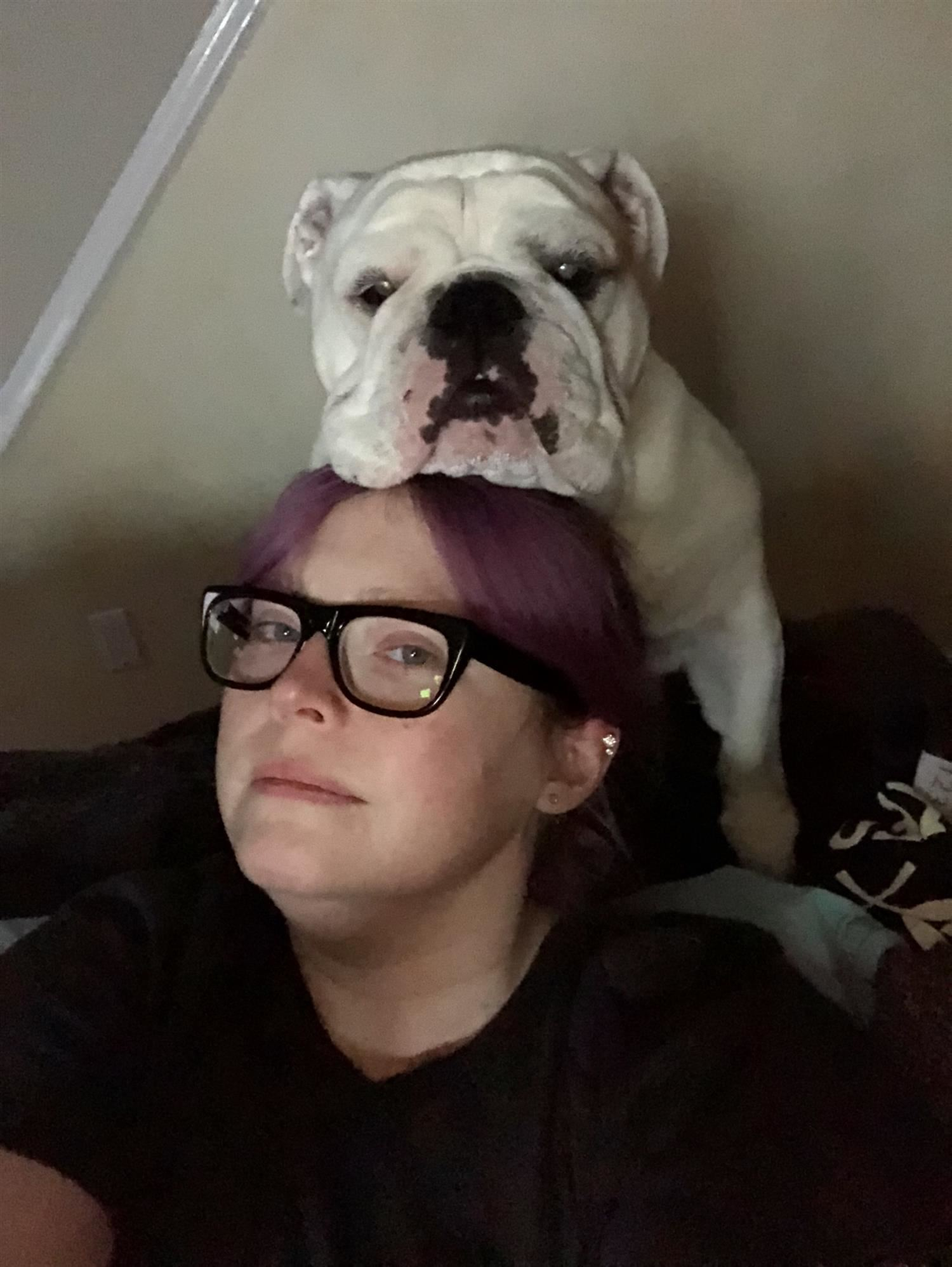 picture of white bulldog resting its head on its human's head